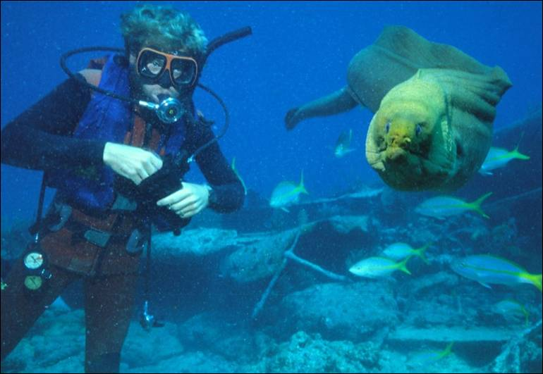 http://reddog-diving.com/FISH_FEEDING_files/image072.jpg